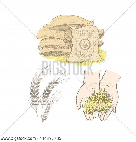 Grain In The Palms, Sacks Of Wheat, Ears Of Grain. Vintage Set.