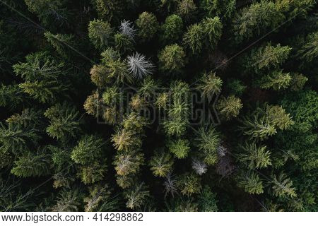Green coniferous forest from above. Green summer background,aerial top view, Europe
