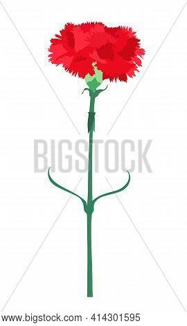 Carnation Flower Isolated On White Background. Vector Illustration