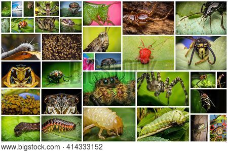 Nature Collage Of Variety Of Common Insects And Arachnids Shot In Extreme Closeup Macro
