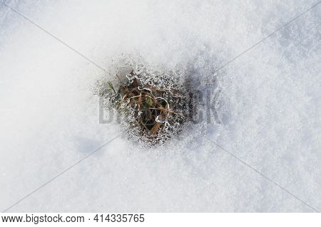 First Fresh Green In Holes Of The Snow Cover Of A Countryside Meadow