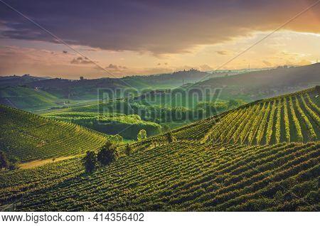 Langhe Vineyards, Unesco Site, Neive, Piedmont, Northern Italy Europe.