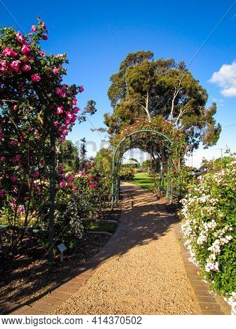 Outdoor Rose Garden With Footpath Leading To An Arch Covered By Foliage. The Unpaved Footpath Is Pla