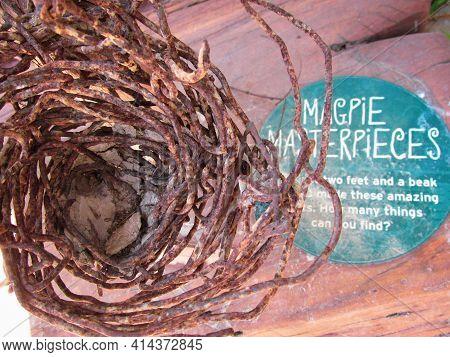 Healesville, Australia - 30 Dec 2016: Magpie's Nest Made Of Stolen Steel Wires. Crafty Magpies Will
