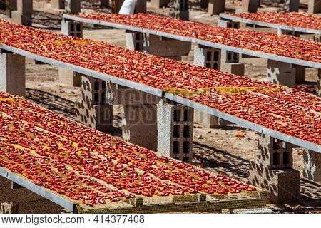 Amazing Arrangement Of Red Dried Tomatoes. The Sun-dried Tomatoes Are Left To Dry Under The Hot Summ