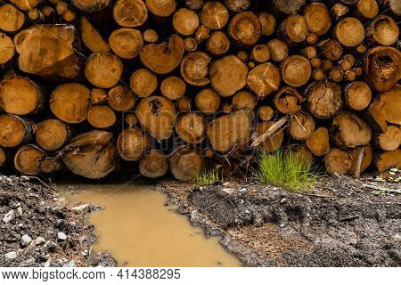 Small Pile Of Felled Trees As Background