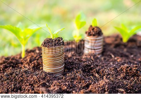 Money Growth. Small Tree On Stack Coin And Soil With Green Background Blured. Planing Earn Money Inv