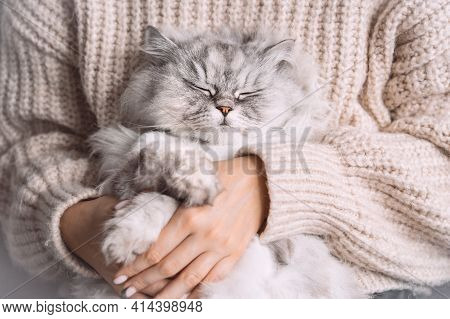 Adorable Cute Persian Longhaired Cat With Closed Eyes Sitting In His Owner Arms. Pets And Humans Lov