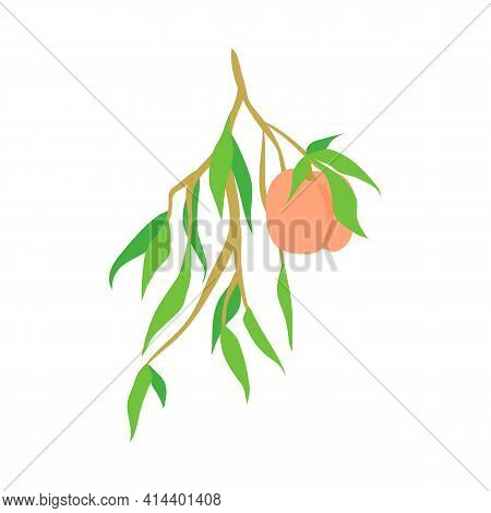 Fruit Peach Branch, Illustration Isolated On White Background. Kitchen Design Decoration, Food Packa