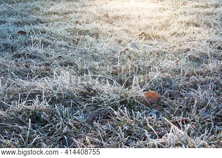 Hoarfrost On The Grass In Spring Morning