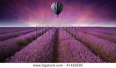 Stunning Lavender Field Landscape Summer Sunset With Hot Air Balloon