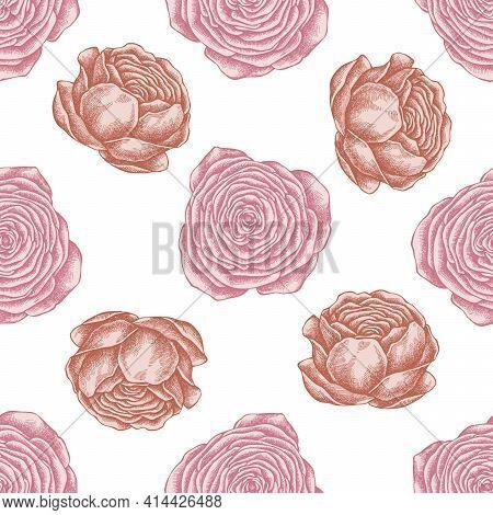 Seamless Pattern With Hand Drawn Pastel Ranunculus Stock Illustration