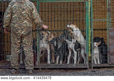 Man Opening Metal Cage Shelter For Pack Of Homeless Dogs L. Concept Of Homeless Dogs
