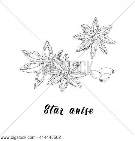Anise Sketch Illustration In Vintage Style. With Grains On A White Background.