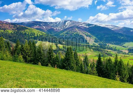 Stunning Mountain Landscape. Beautiful Alpine Nature View With Spruce Forest. Grassy Meadow On The H