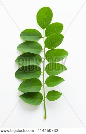 Black Locust Or False Acacia Green Foliage Isolated On White Background. Field With Clipping Path.
