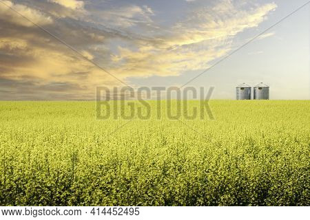 A Pair Of Silver Industrial Grain Storage Silos Sit On A Blooming Yellow Oil Seed Field At Sunset On