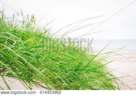 Dune With Beach Grass On The Ocean Coastline In Close-up.