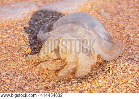 Sea Jellyfish On The Sea Coast In Summer On A Hot Day. Jellyfish On The Sand.
