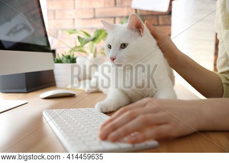 Adorable White Cat Lying On Table And Distracting Owner From Work, Closeup