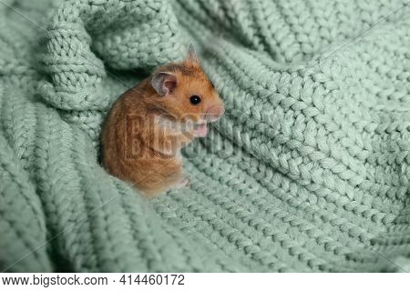 Cute Little Hamster On Green Knitted Sweater, Space For Text