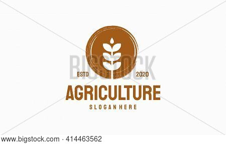 Luxury Grain Wheat Logo Concept, Agriculture Wheat Logo Template Vector Icon With Abstract Brush Cir