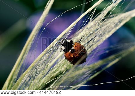 Botanical backdrop with red lady bug on wet grass with lot of tiny water droplets after rain