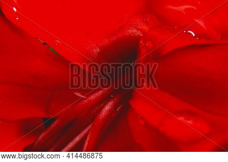 Macro Shot Bright Red Flower Close-up Picture