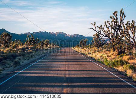 Straight Road To Horizon In Mojave Desert Of Joshua Tree National Park, California, Usa. Soft Sunset