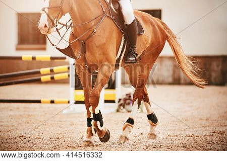 A Beautiful Sorrel Horse With A Rider In The Saddle And A Long Tail Proudly Walks Through The Sandy