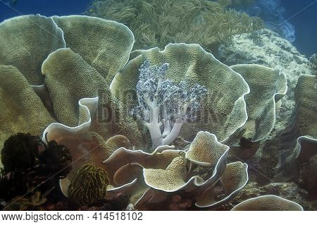Coral Reef With Different Shapes And Textures Of Coral, On A Blue Background Of Water. In The Foregr