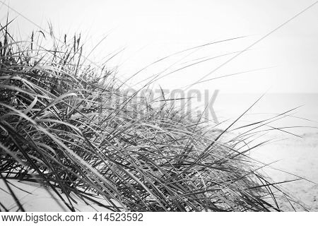 Dune With Beach Grass On The Ocean Coastline In Close-up. Image Modified In Vintage Retro Black And