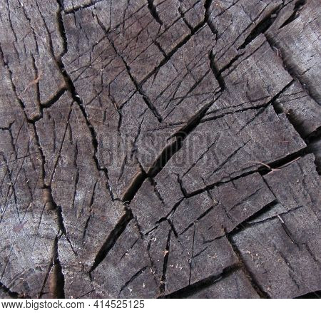 Cracked Wooden Texture, Sawn Stump, Abstract Background