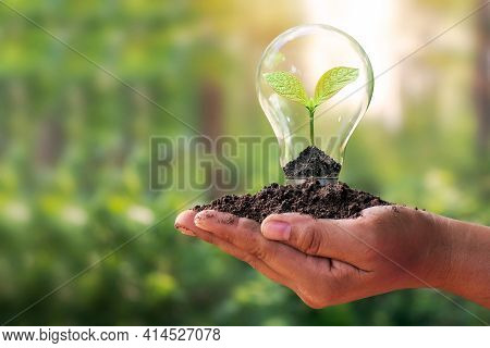 A Small Tree Planted In An Energy-saving Light Bulb In The Hands Of A Young Woman, The Concept Of En