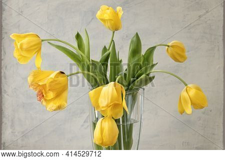 Bouquet Of Yellow Tulips On Gray Textured Background. Fading Yellow Tulips On A Gray Background In A