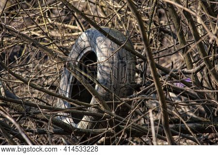 Unusable Car Tire In A Garbage Dump In The Forest. Old Used Rubber Car Tire Discarded On Raw Forest