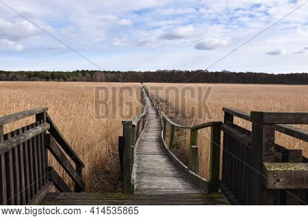 Wooden Foot Path Through The Reeds On The Island Oland In Sweden