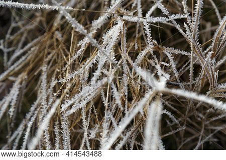 Rime On The Grass. Large Crystals Of Frost On Dry Grass. Frozen Herb  Covered With Frost On Natural