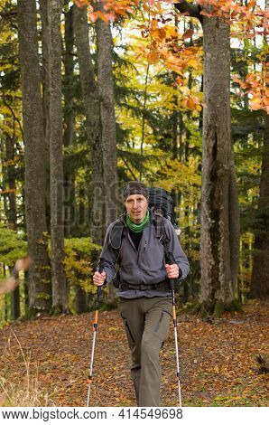 Male Tourist In The Forest. Tourist With A Backpack. Tourist With Trekking Poles. Vertical Frame.