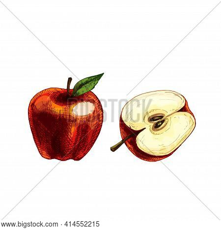 Apple Whole And Half With Leaf. Vector Vintage Hatching Color Illustration. Isolated On White Backgr