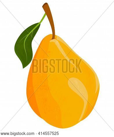 Large Yellow Pear With Leaf Isolated On White Background. Textured Appetizing Pear. Vector Drawing O