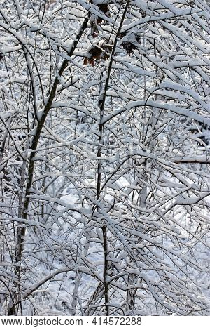 Crisscrossed Freshy Snow Covered Branches Create A Beautiful Wintry Thicket Pattern