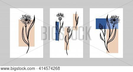 Cornflower Minimal Poster Set. Hand Drawn Line Black Knapweed Flowers And Leaves With Abstract Shape