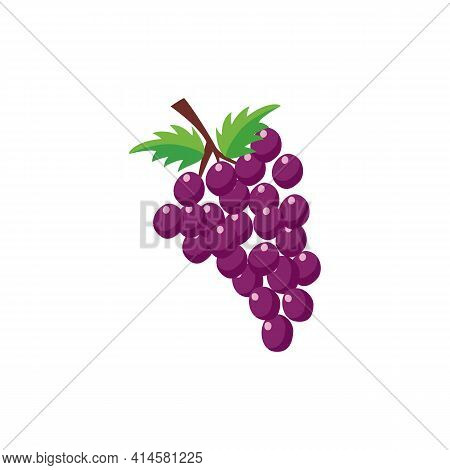 Bunch Of Purple Grapes With Green Leaves, Flat Vector Illustration Isolated.