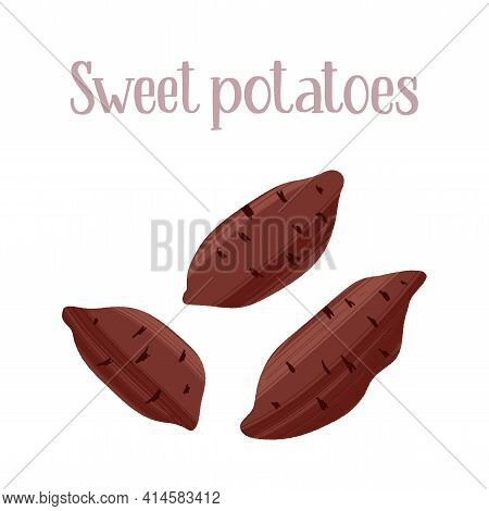 Unpeeled Sweet Potato Tubers. Carbohydrates For Healthy Nutrition.