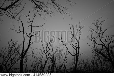Low Angle View Of Silhouette Dead Tree Against Dark Dramatic Sky. Background For Lonely, Sad, Hopele