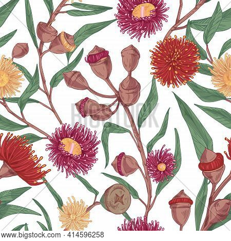 Seamless Botanical Pattern With Blooming Eucalyptus Flower On White Background. Elegant Blossomed Eu