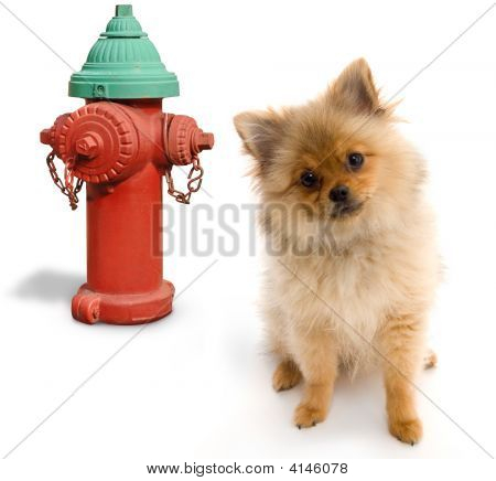 Dog And Hydrant