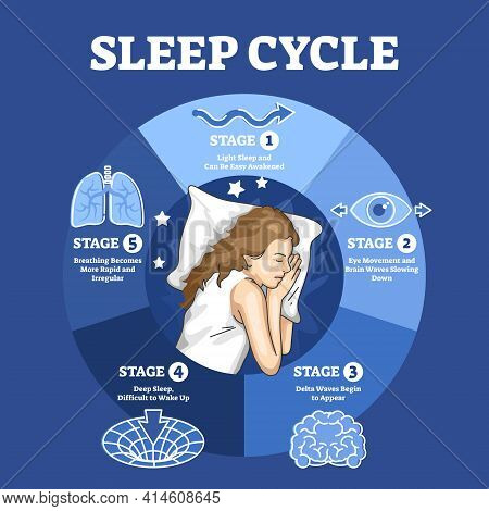 Sleep Cycle With Labeled Night Stages And Phases Description Outline Diagram
