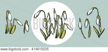 A Set Of Snowdrop Colors. Stylish Sketch By Hand In Pastel.